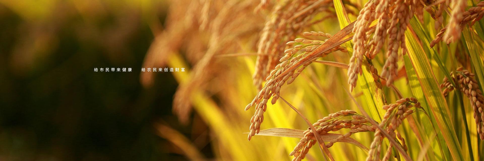 给市民带来健康 给农民创造财富